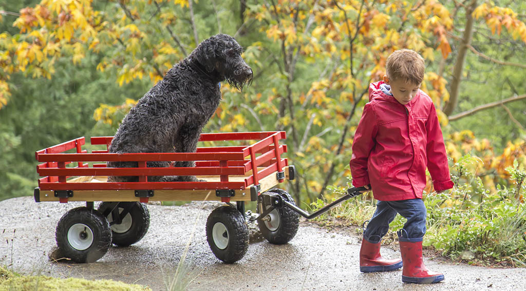 Best Wagon for Dogs