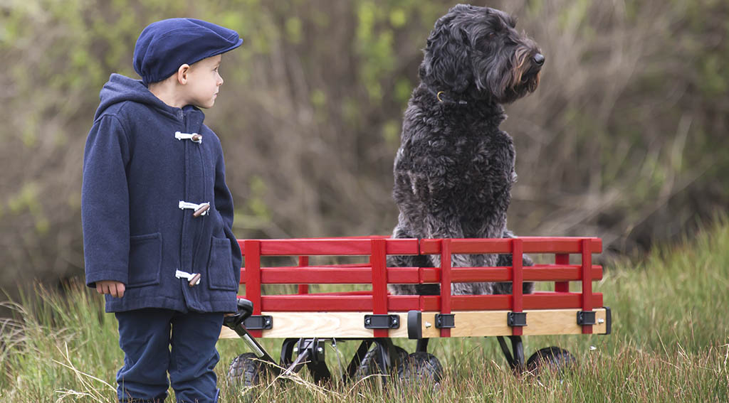 Wagon for Dogs Buying Guide